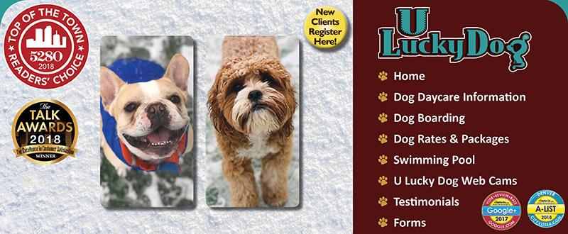 U Lucky Dog Daycare